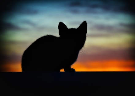 A cat is silhouetted against a brilliant sunset